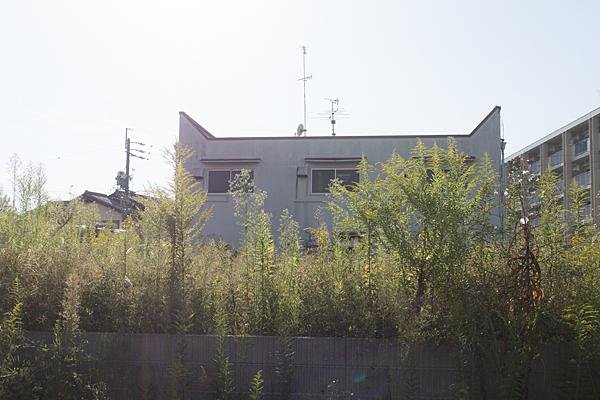 空き地の夏草