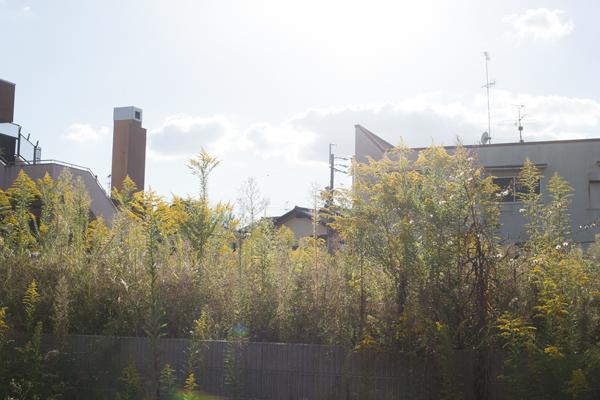 空き家の秋