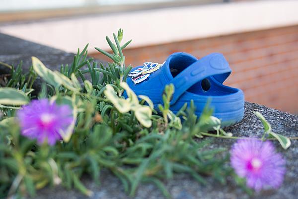 忘れ物の靴とマツバギク