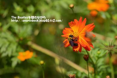 IMG_2021_08_21s_03311.jpg