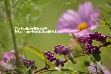 IMG_2021_09_19s_03539.jpg