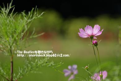IMG_2021_09_19s_03543.jpg