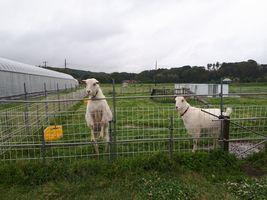 【写真】餌カゴを待つアランとポール