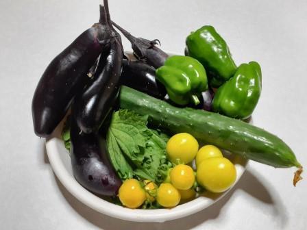 プランターの野菜1〈2021-07-18).