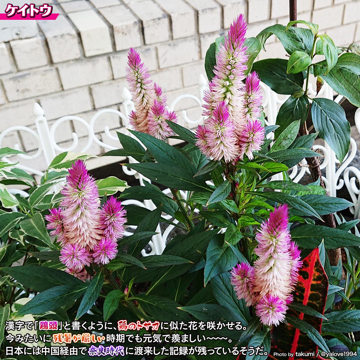 DSC_0011_20210823191932c0d.jpg