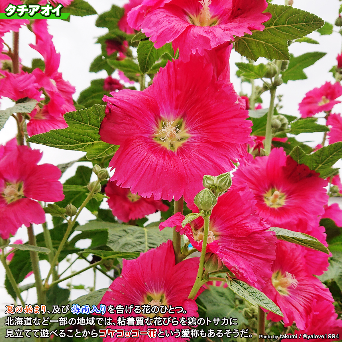DSC_3733.jpg