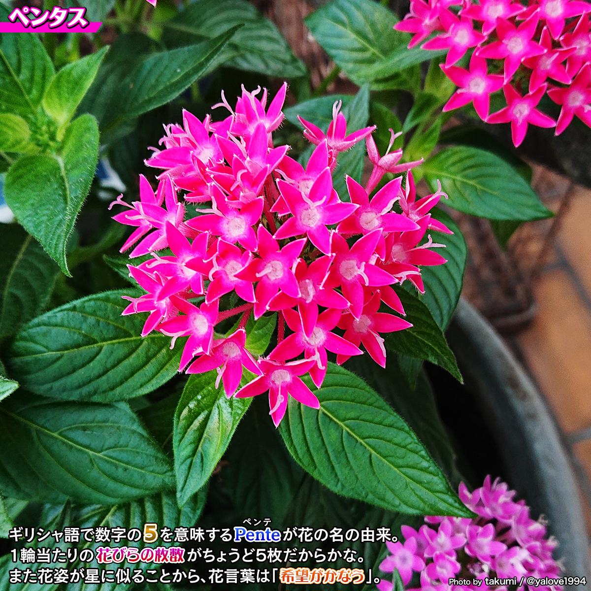 DSC_5148a.jpg