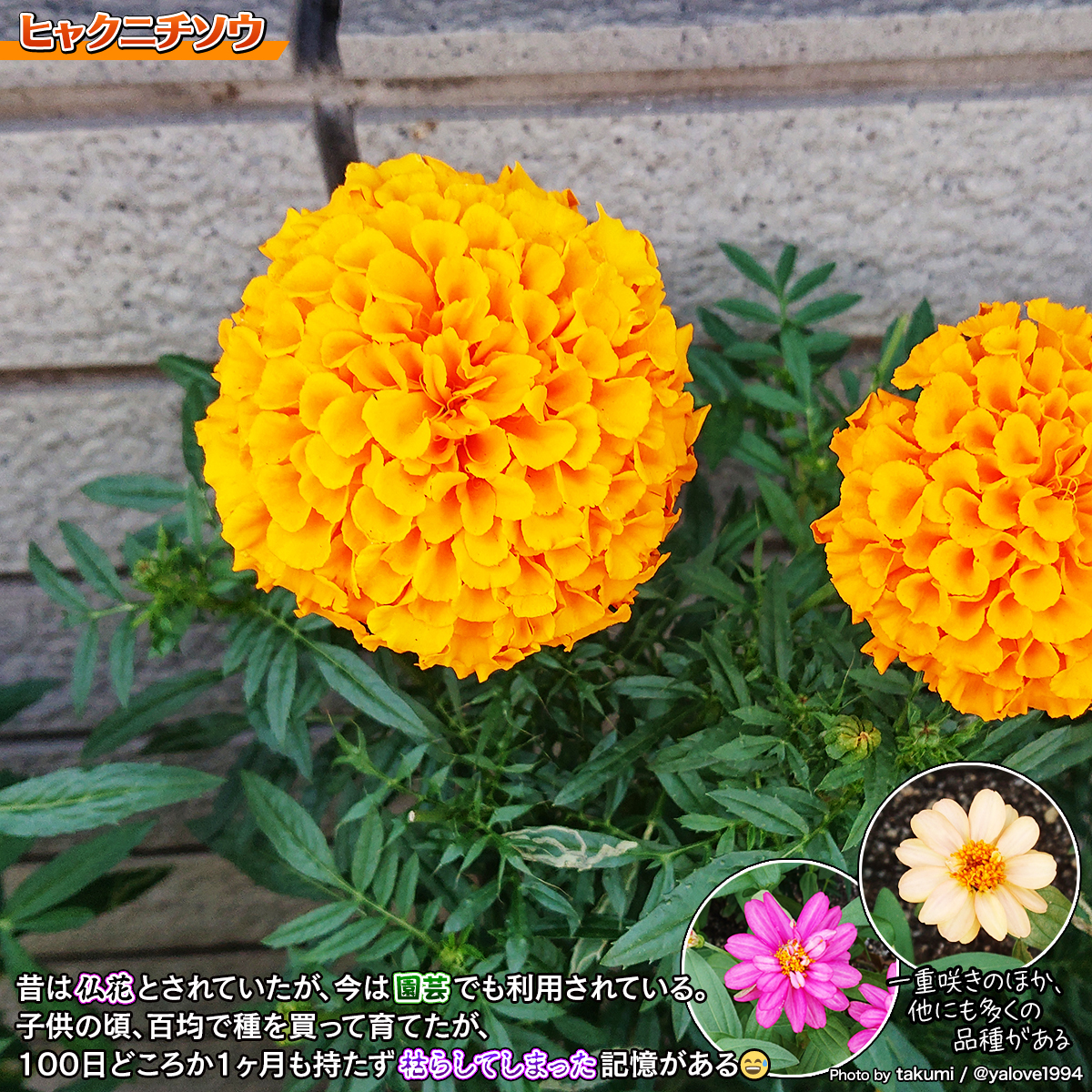 DSC_5276a.jpg