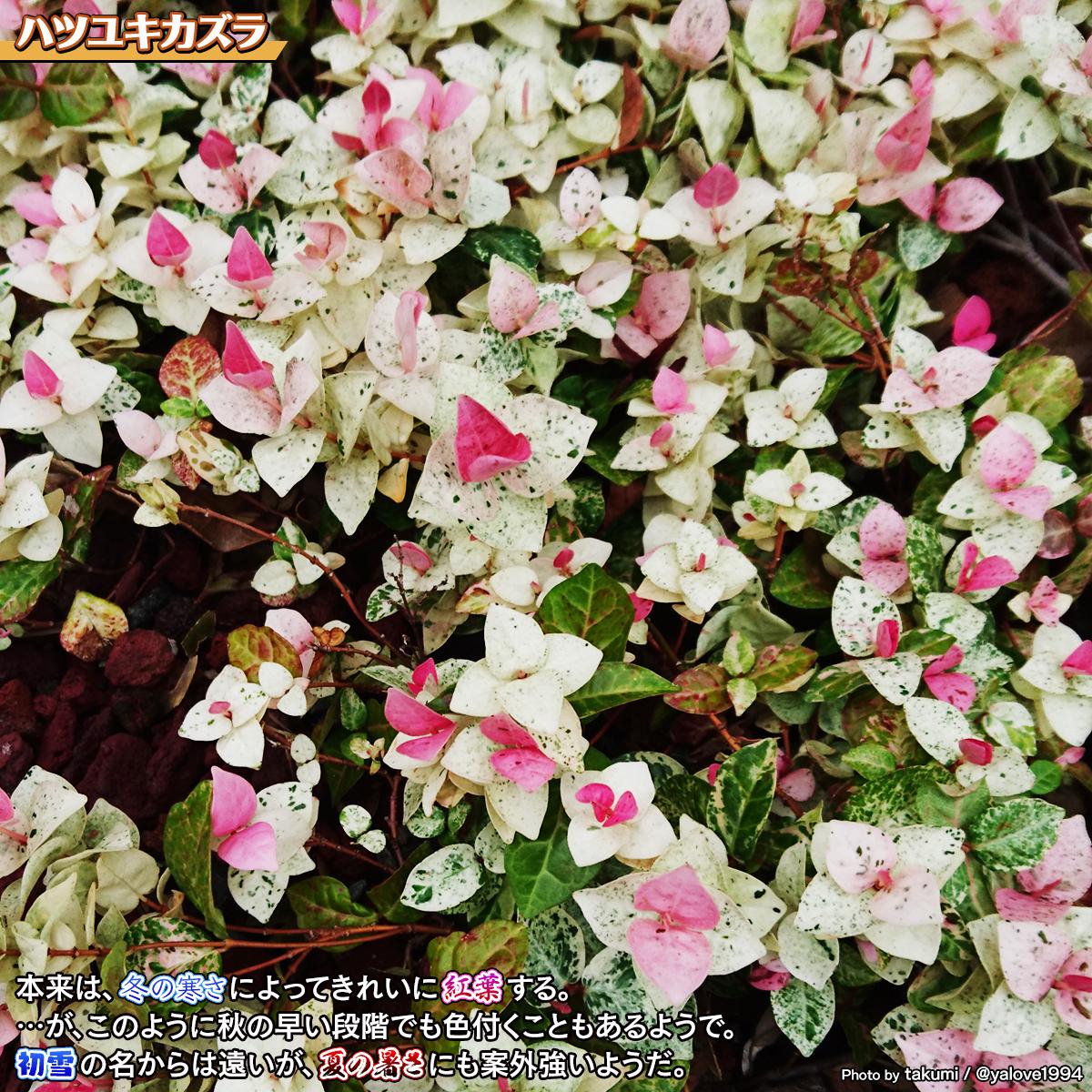 DSC_8119_20210919010619592.jpg