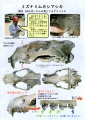 web01-kaseki-museum-EPSON059.jpg