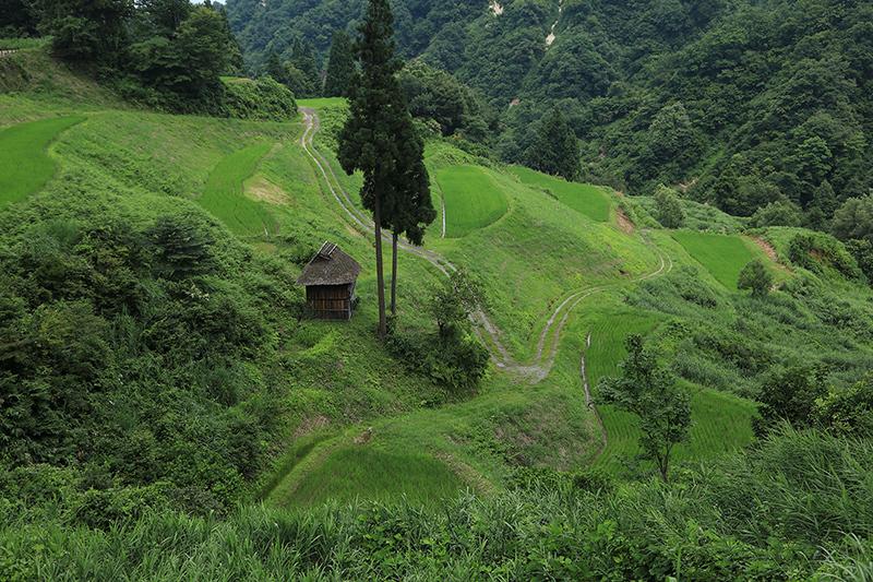 松之山 6